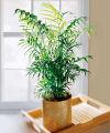 FTD Palm Plant