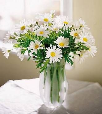 Cheap Flower Bouquets on Ftd Daisy Vase   Get Well Flowers   Flowers Fast