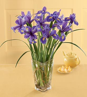 Discount Flower Delivery on Ftd Blooming Iris Bouquet   Spring Flowers   Flowers Fast