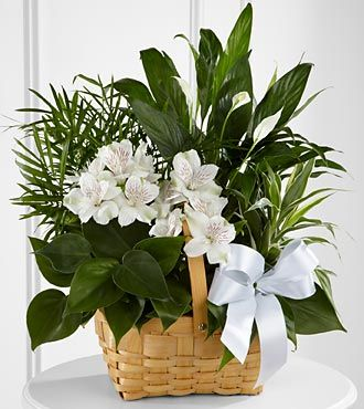 FTD Peace & Serenity Dishgarden - C23-4454