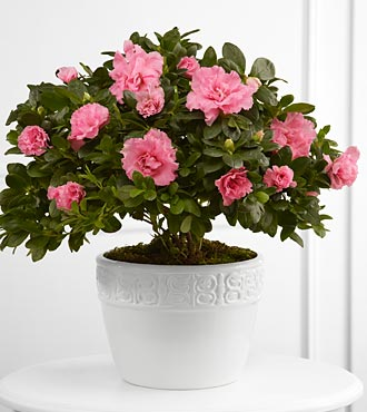 Flowers Fast coupon: FTD Vibrant Sympathy Planter