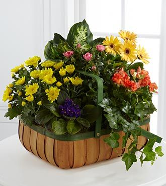 FTD Gentle Blossoms Basket - DELUXE