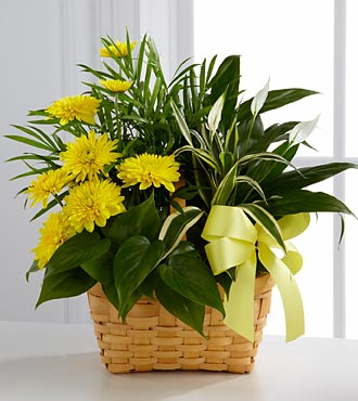 Flowers Fast coupon: FTD Loving Light Dishgarden