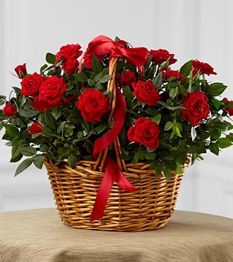 FTD Mini Rose
