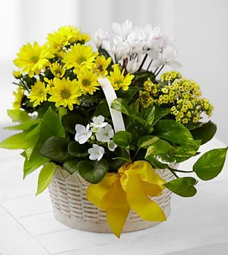 FTD A Bit of Sunshine Basket - C22-4888