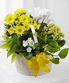 Image of Standard version for FTD A Bit of Sunshine Basket