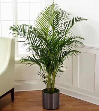 Palm Plant by FTD