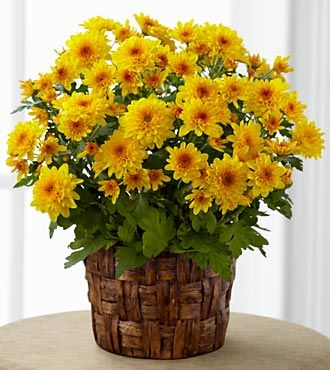 FTD_Chrysanthemum