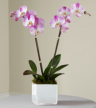 FTD Pink Orchid Planter - S15-4991S