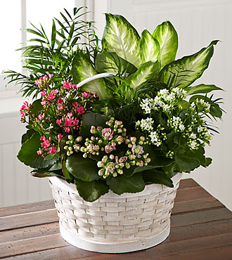 FTD_Rural_Beauty_Dishgarden