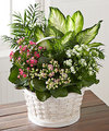 FTD Rural Beauty Dishgarden