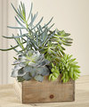 Image of Standard version for FTD Southwest Sophistication Dishgarden
