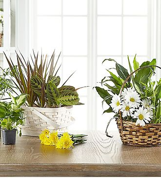 FTD Florist Designed Blooming and Green Plants in a Basket - EO-6059