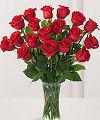 Růže, poslat květiny, květinářství on-line, doručování květin, rostlin, blahopřání, dárkové, kytice, aranžmá, FTD, Teleflora