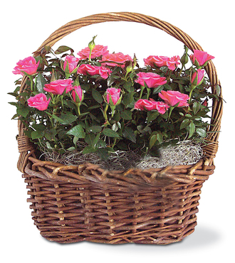 Rose Garden Basket - FedEx