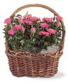 Rose Garden Basket - FedEx
