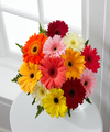 Image of Standard version for Colorful World Gerbera Daisy Bouquet - 12 Stems No Vase - FedEx