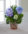 Harvest Moon Hydrangea Plant - FedEx