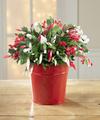 Make It Merry Christmas Cactus - FedEx