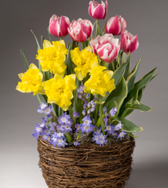Spring Has Sprung Bulb Basket - FedEx - WGP1104