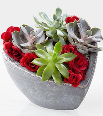 Succulent_Heart_Garden__FedEx