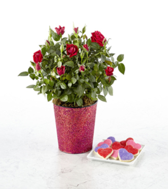 Follow Your Heart Valentine's Day Mini Rose with Gourmet Cookies - FedEx
