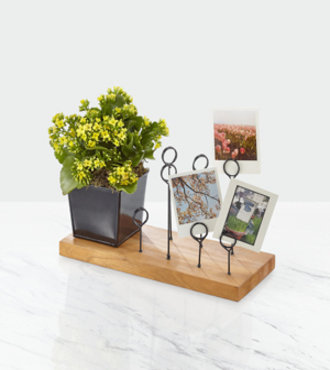 Sunshine State of Mind Kalanchoe with Messenger Board - FedEx