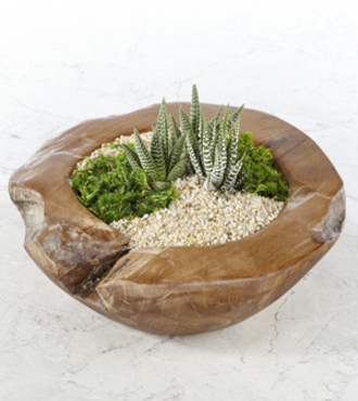 Walk in the Sun Succulent Bowl Garden - FedEx - WGP1370