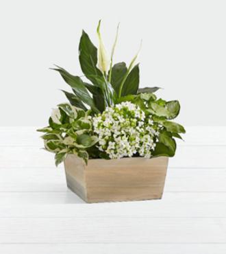 http://www.FlowersFast.com - Peaceful White Garden – FedEx
