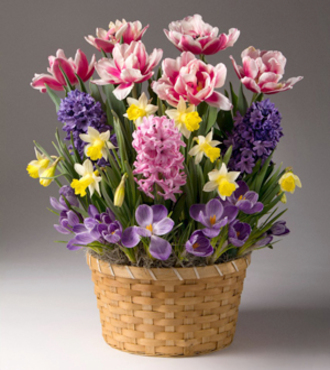 Flowers Fast coupon: Bright Blooms Bulb Garden - FedEx