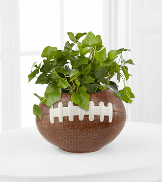 Football Fields Ivy Plant - FedEx