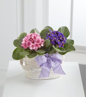 Violet Views Blooming Basket - FedEx