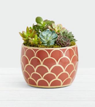 Desert_Jewel_Succulent_Garden__FedEx