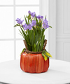 Pumpkin Perfection Fall Freesia Plant - FedEx