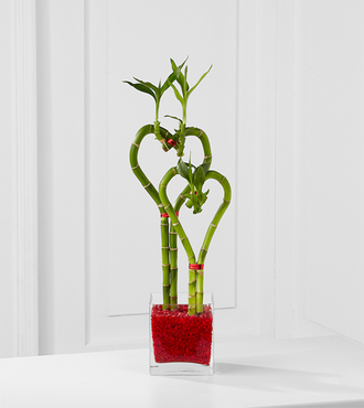 Be Still My Heart Valentine Bamboo - Double - FedEx - WGPB19