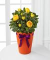 Celebration Starter Birthday Mini Rose Plant - FedEx