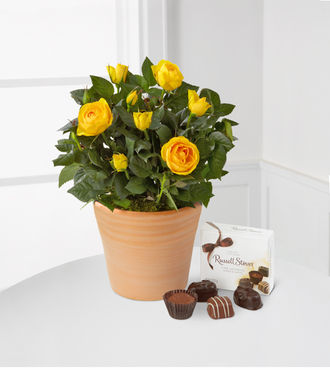 Cheerful Heart Mini Rose with Chocolates - FedEx