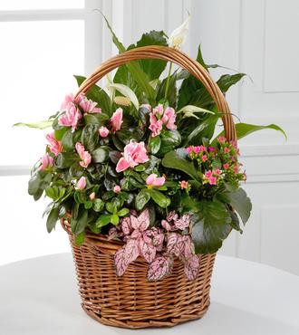 Pink Inspirations Dish Garden - FedEx
