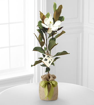 FTD Southern Sensibilities Magnolia Tree by Better Homes and Gardens - FedEx