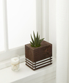 FTD Sophisticated Statements Succulent Plant by Better Homes and Gardens - FedEx