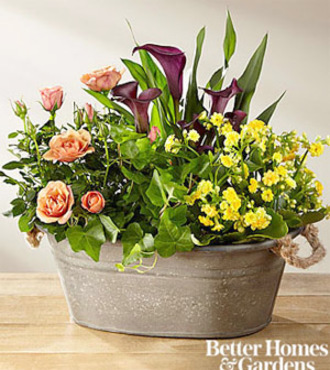 FTD Autumn Moods Blooming Dishgarden by Better Homes and Gardens - FedEx
