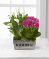 Ftd Sunlit Simplicity Dishgarden By Better Homes And Gardens Fedex