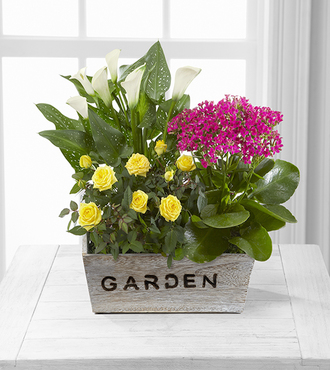 FTD Sunlit Simplicity Dishgarden by Better Homes and Gardens - Deluxe - FedEx