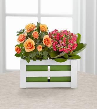 FTD Spring Surprises Plant Duo by Better Homes and Gardens - FedEx