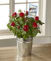 FTD Bright and Happy Birthday Mini Rose by Hallmark - FedEx