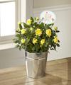 FTD Precious Baby Mini Rose by Hallmark - FedEx