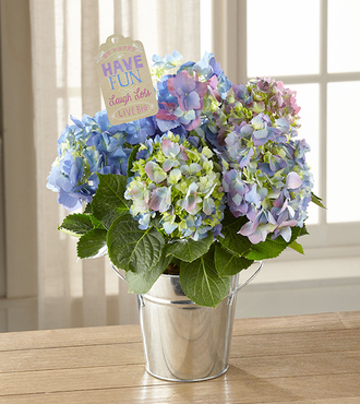 FTD Have Fun Laugh Lots Hydrangea Plant by Hallmark - FedEx
