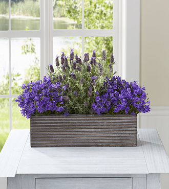 FTD Editor's Choice Purple in Bloom Windowbox by Better Homes and Gardens - FedEx