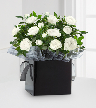 Kind Condolences Mini Rose Plant - FedEx