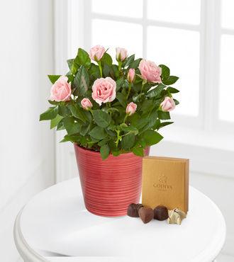 Sweet Emotions Mini Rose with Godiva Chocolates - 4.5-inch - FedEx